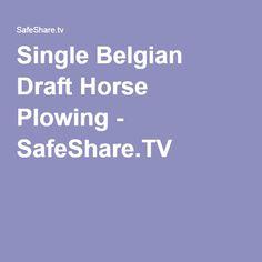 Single Belgian Draft Horse Plowing - SafeShare.TV
