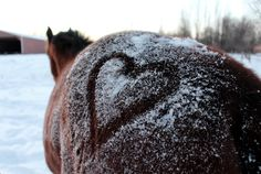 In riding a horse, we borrow freedom. Equine Photography, Winter Photography, Animal Photography, Photography Ideas, Wildlife Photography, Cute Horses, Horse Love, Horse Photos, Horse Pictures