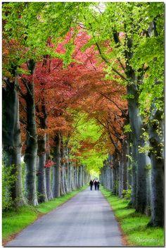 Finally new leaves, Groningen, Netherlands
