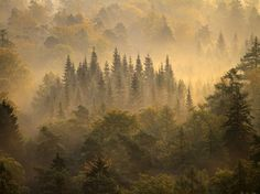 Morning Forest, Germany (NatGeo)
