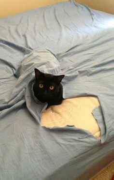 You didn't get me a blanket... I improvised...