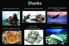 True story about sharks - http://www.dive.in/articles/shark-fin-soup/