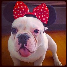 Pin for Later: The Easiest Disney Halloween Costume For Your Dog