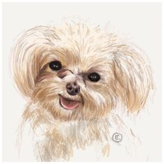 Let me create a PET PORTRAIT for you! Send me a photo of your pet, and Ill create YOUR very own Pet portrait. Created by hand! Pet Portraits, Your Pet, How To Draw Hands, Teddy Bear, Pets, Create, Painting, Animals, Animaux