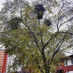 Flerfamiljsträd