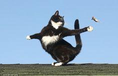 手を差し伸べる:それは最終的に猫とネズミのゲームで敗北を認めているように、マウスが空高く投げている