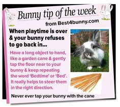 Bunny tip - for when bunnies give you the run around. www.best4bunny.com Rabbit Life, House Rabbit, Bunny Rabbit, Mini Lop Bunnies, Baby Bunnies, Lana Banana, Rabbit Facts, Raising Rabbits, Bunny Care