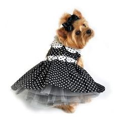 For Her: pretty dog clothes for little girl dogs. Dog dresses and party dog clothes for small dogs that like to dress up Yorkies, Dog Clothes Patterns, Pet Fashion, Pet Clothes, Dog Clothing, Puppy Clothes Girl, Yorkie Clothes, Clothes Hangers, Girl And Dog