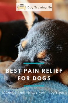 What is the best pain relief for dogs? We take a look at how to tell when your dog is in pain and how to manage and relieve it. It could be medication recommended by your vet or a natural solution to your dog's pain. Read our article for more. Meds For Dogs, Medication For Dogs, Dog Leg, Dog Information, Diabetic Dog, Happy Animals, Old Dogs, Dog Boarding, Dog Care