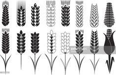 Vector Art : wheat and corn