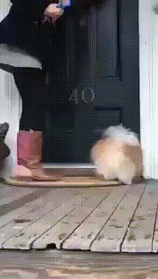 GIF Clean your paws