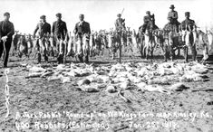 Jackrabbit Drives,held during the Dust Bowl years, was an attempt to curb hungry jackrabbits who ate everything green in site.  Tens of thousands were slaughtered.