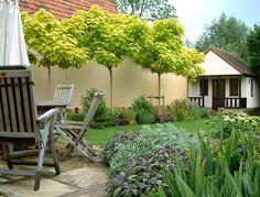 Mark Langford Garden Design. Period property, traditional style garden, catalpa allee, family garden, sandstone paving.