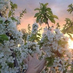 flowers, aesthetic, and nature image Spring Aesthetic, Korean Aesthetic, Flower Aesthetic, Nature Aesthetic, Aesthetic Pastel, Dungeons E Dragons, Plants Are Friends, Pretty Flowers, White Flowers