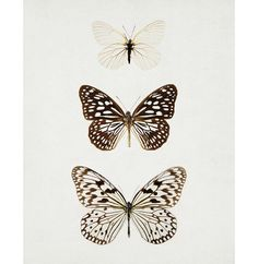 Butterfly Photograph Nature Photography Insect Wings Neutral Wall Decor Modern Winter Garden Minimal Art Print, Brown Beige - Paper Kites