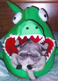 Oh no!  Save the pug! I swear they will sleep ANYWHERE!