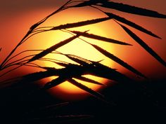 Meadow Sunrise, Oakland