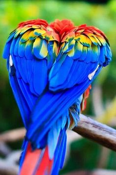 A parrot-keet's colorful wings come together in the shape of a heart. Great way to use the bird's natural color and form a bright shape!