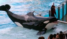 4 Badass People Who Are Changing the Way We View Marine Captivity
