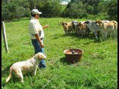 Rasgos del Pastoreo Inteligente - TvAgro por Juan Gonzalo Angel