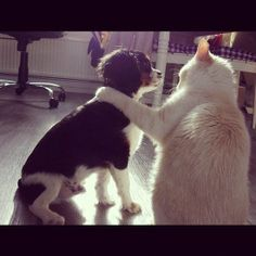 Fighting Like Cats and Dogs! Cute Pets Caught in the Act