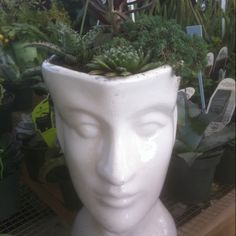Pot head at Springwater Greenhouse!