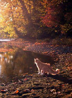"sweatersandspice: "" crisp-season: "" autumn leaves~haunted breeze "" ~come get cozy~ """