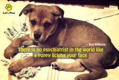 There is no psychiatrist in the world like a puppy licking your face. —Ben Williams