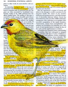 Birds in Books by Pennsylvania artist and designer Paula Swisher Book Design Graphique, Book Page Art, Colossal Art, Dictionary Art, Mellow Yellow, Yellow Black, Color Yellow, Art Plastique, American Artists
