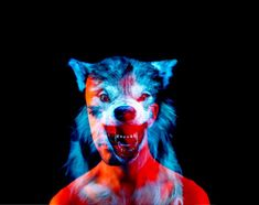 wolf by Derek Wood Multiple Exposure, Double Exposure, Creative Photography, Animal Photography, Video Clips, Photo Images, Wolf Pictures, Glitch Art, Arte Pop
