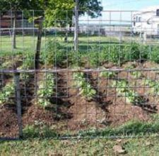 When to Plant Vegetables in Texas