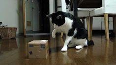 雄山(猫)vs猫貯金箱 Yuzan-cat vs Cat Bank. Funny Cat Memes, Funny Cat Videos, Funny Cats, Cat Vs Cat, Dog Cat, Kittens Cutest, Cats And Kittens, Tastefully Offensive, Gifs