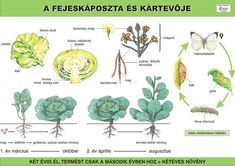 Biology, Lily, World, Plants, Google, Science, Vegetables, School, Vegetable Recipes