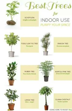 Indoor trees