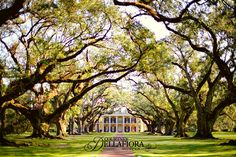 ...so far!!! I haven't shot everywhere but I have shot a lot of places in South Louisiana and I've picked out my favorites from my experience so far. I am sure there are many more places I would love but here are just a few that are amazing.Houmas House -- definitely one of my top favorites by…