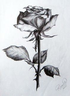 Healthy meals for dinner easy meals ideas free Pencil Drawings Of Flowers, Flower Sketches, Pencil Art Drawings, Realistic Drawings, Cool Drawings, Drawing Sketches, Plant Drawing, Rose Art, Gravure