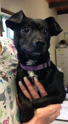 Journey is a 1 year-old male Chihuahua-Dachhund mix. He weighs about 11 pounds. He was from a full shelter had a skin condition but is much better now. The $150 adoption fee helps cover spay/neuter, vaccinations, microchip, vetting, food/care and 30 days of health insurance. Call Pets Without Partners at 243-6911. Go to www.petswithoutpartners.org. Go to www.redding.com for more photos of more adoptable pets.