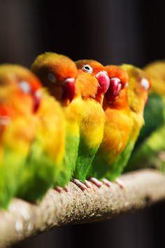 F&O Forgotten Nobility — animals-of-the-world: (via 500px / Photo...