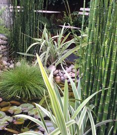 Lush planting around this wildlife pond Bespoke Design, Planting, Pond, Lush, Garden Design, Wildlife, Landscape, Flowers, Custom Design
