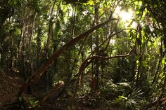 http://pin.sanctuarybelize.com    The serene nature in the 10,000 acre rainforest jungle at Sanctuary Belize.