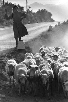 Pietro Donzelli, photo | 1915-1998, Italy
