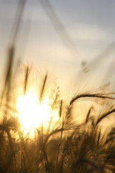 ~ Fields of Gold ~ Iphone Wallpaper 4k, Fields Of Gold, Wheat Fields, Morning Light, Morning Sun, Mellow Yellow, Image Hd, Belle Photo, Sunlight