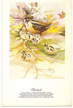 Barton-Cotton, Woodcock Bird Postcard @ Vintage Touch $5.00