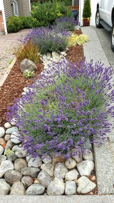 River rock landscape and lavender bush #WaterGarden