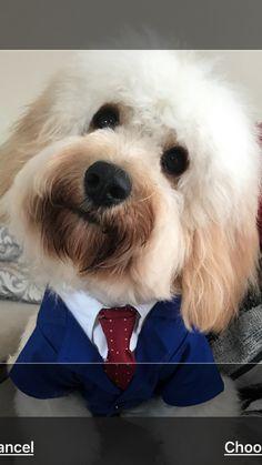 Mr bailey Dogs, Animals, Animales, Animaux, Pet Dogs, Doggies, Animal, Animais