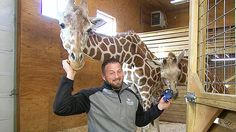Is April The Giraffe Pregnant Again? Her Caretaker Shares The Viral Zoo Animal Could Be Expecting https://tmbw.news/is-april-the-giraffe-pregnant-again-her-caretaker-shares-the-viral-zoo-animal-could-be-expecting  Here we go! Seven months after giving birth to her son, April the Giraffe might have another bun in her oven. The viral star's caretaker dropped a massive hint that April could be pregnant again!Forget Kylie Jenner or Khloe Kardashian . It's time for fans to start a bump watch on a…
