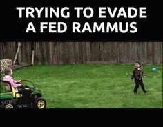When Rammus is fed