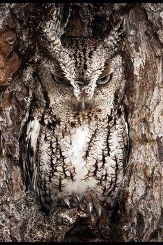 Owl camouflage