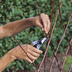 How To Build A Diamond-patterned Twig Trellis