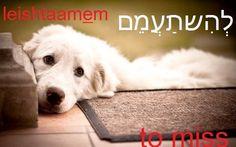 to miss #hebrew מִשתַעֲמֵם   מִשתַעֲמֶמֶת   מִשתַעמְמִים  מִשתַעמְמוֹת